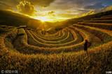 探访越南绝美梯田 稻浪绵延堪比油画